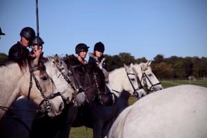 Jo sound recording horses hooves